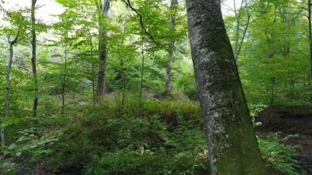 Stromy a zelený listnatý les.