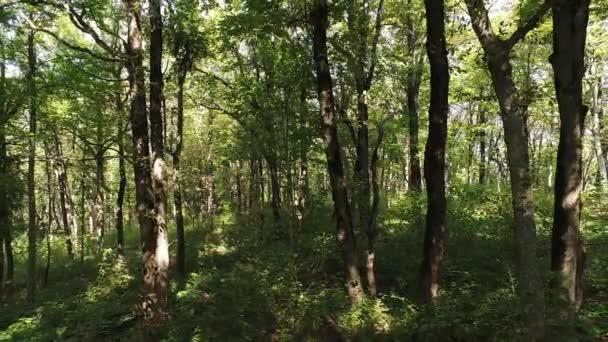 Zelený listnatý les a stromy. Krásné přírodní pozadí.
