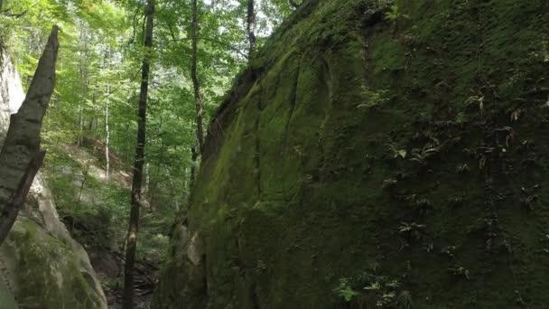 Zöld lombos erdő, a fák és a rock.