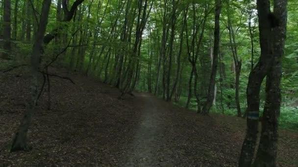 Trasa mezi stromy v lese. Krásný les