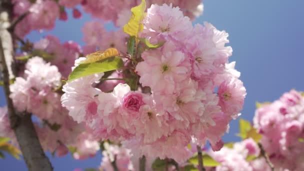 Tavaszi, természet virágzik. Gyönyörű virágzó fa tavasszal.