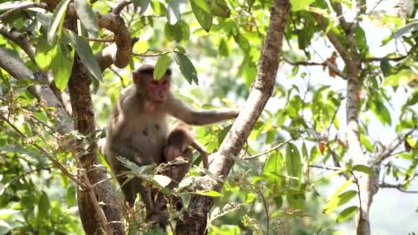 India, Karnataka, monkey mother with a cub are sitting on a tree in the forest