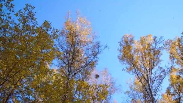 Podzimní strom větev stromu, žlutá na pozadí modré oblohy