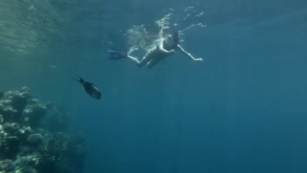 Woman tourist in full face snorkeling mask and fins lies on the surface of the water and look at the tropical fish
