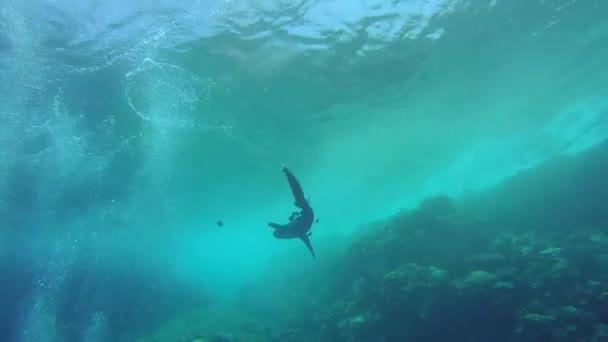 Óceáni fehérfoltú cápa úszni, búvár víz - alacsony szögű felvétel, óceáni fehérfoltú cápa (Carcharhinus Longimánusz), Red Sea, Egyiptom a felszín alatt közelében