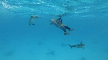 Wideo z delfinami