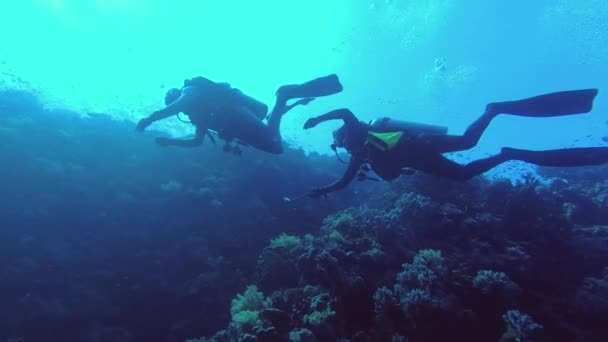 Two scuba divers swim alongside a coral reef wall, a school of tropical fish in the background - Low-angle shot. Underwater shots