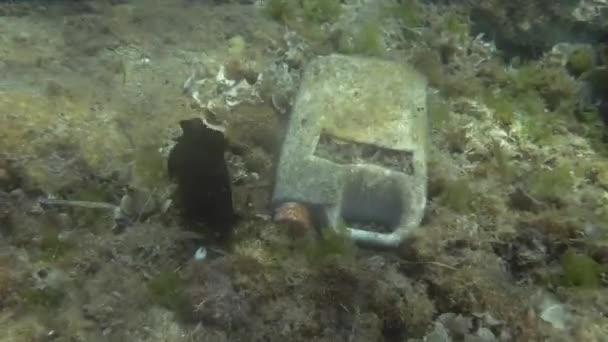 Plastikverschmutzung, Nacktschnecken-Seehase kriecht in der Nähe eines Plastikkanisters auf dem Meeresboden im Mittelmeer, Europa. Sooty Seehase oder Mottled Seehase (Aplysia fasciata)