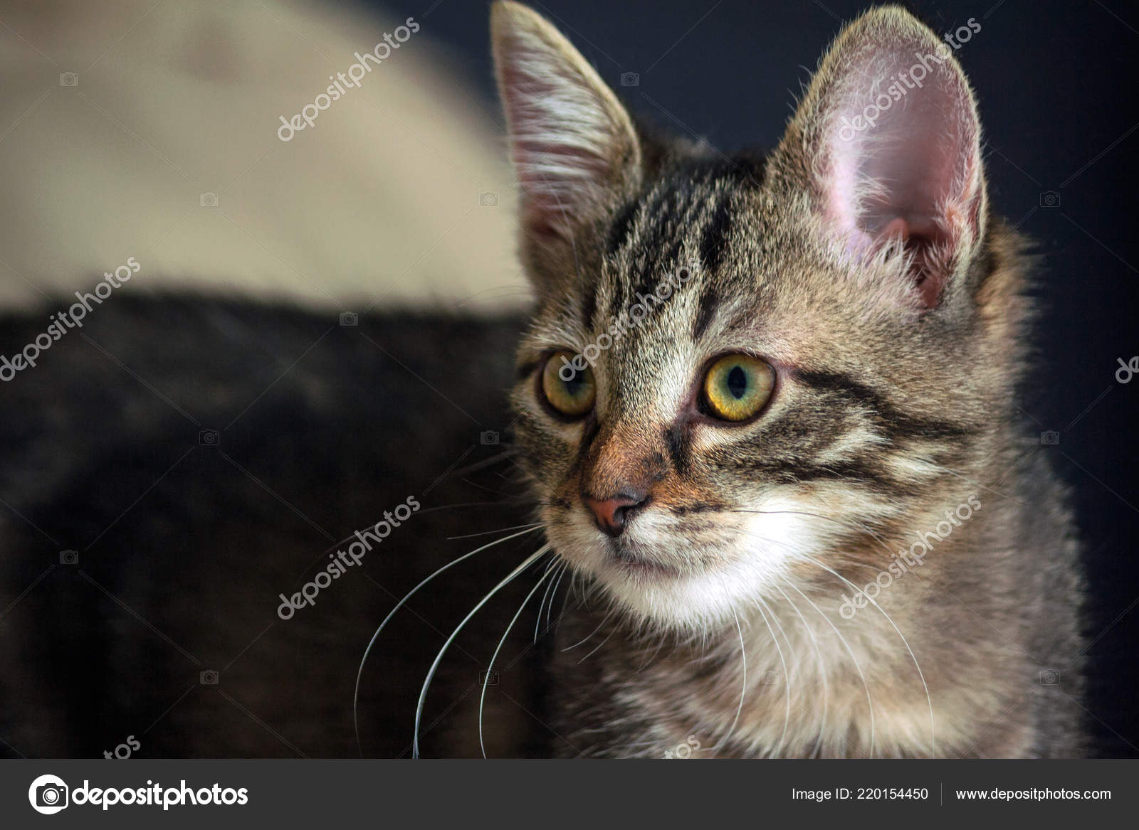 Small Mongrel Kitten Standing Looking Side Head Turned Body