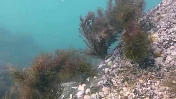 Waves sway the brown algae.