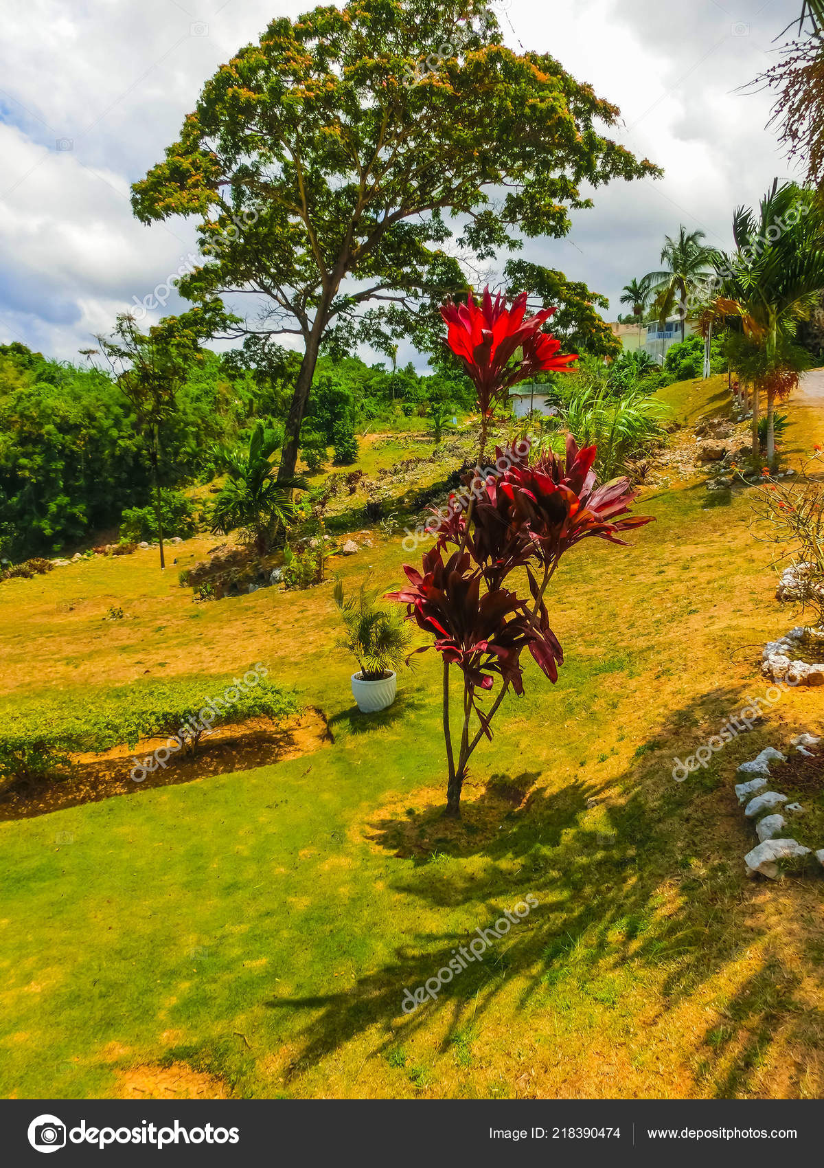 Green Natural Park Landscape Scenery At Ys Falls Jamaica Stock