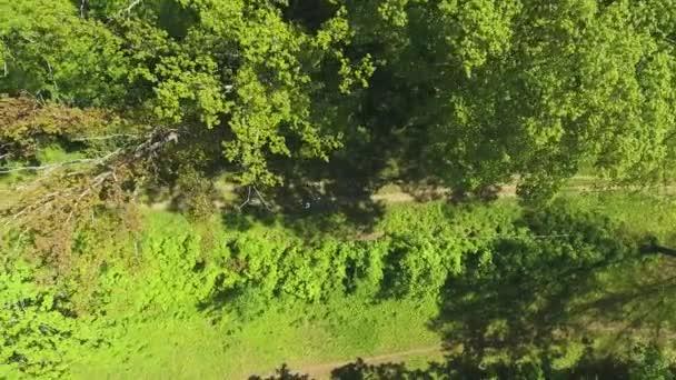 vzdušný vrchol skupiny běžců soutěžících na pěšině v zeleném lese