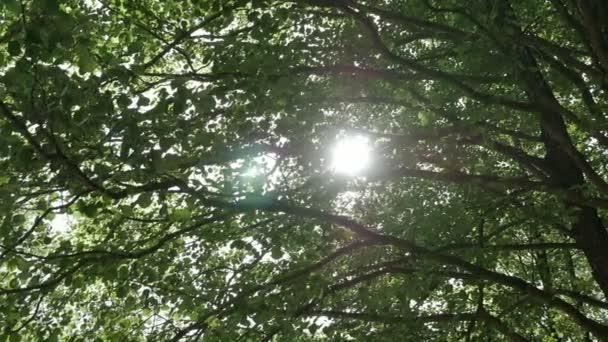 Akumulující paprsky slunce a aby jejich cestu přes větve stromů.