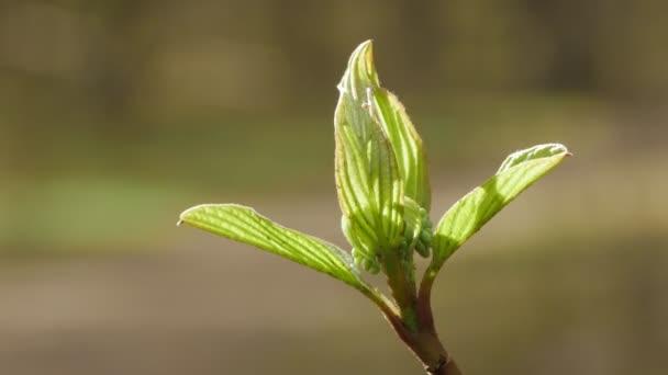 Zblízka pohled krásných mladých zelených listů. Jarní Slunečné příroda pozadí.