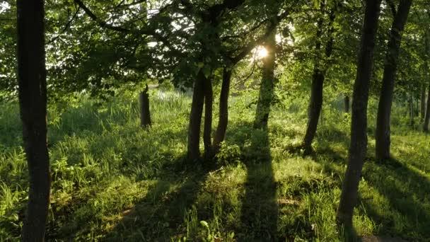 Sluneční světlo svítí skrz stromy.