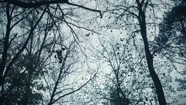 Temné stromy proti podzimní obloze, strašidelný obraz, špatná nálada, thrillerův jev