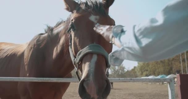 Női kéz fogdossa a lovat finoman, ember-állat kommunikáció, a természet szeretete