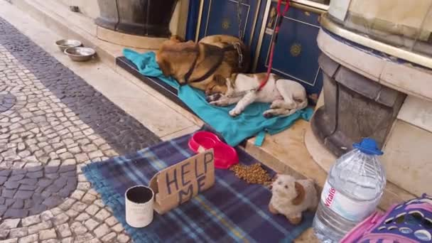 Lisbon, Portugal - May 20, 2019: Stray animal dogs on city street with Help sign used for raising money