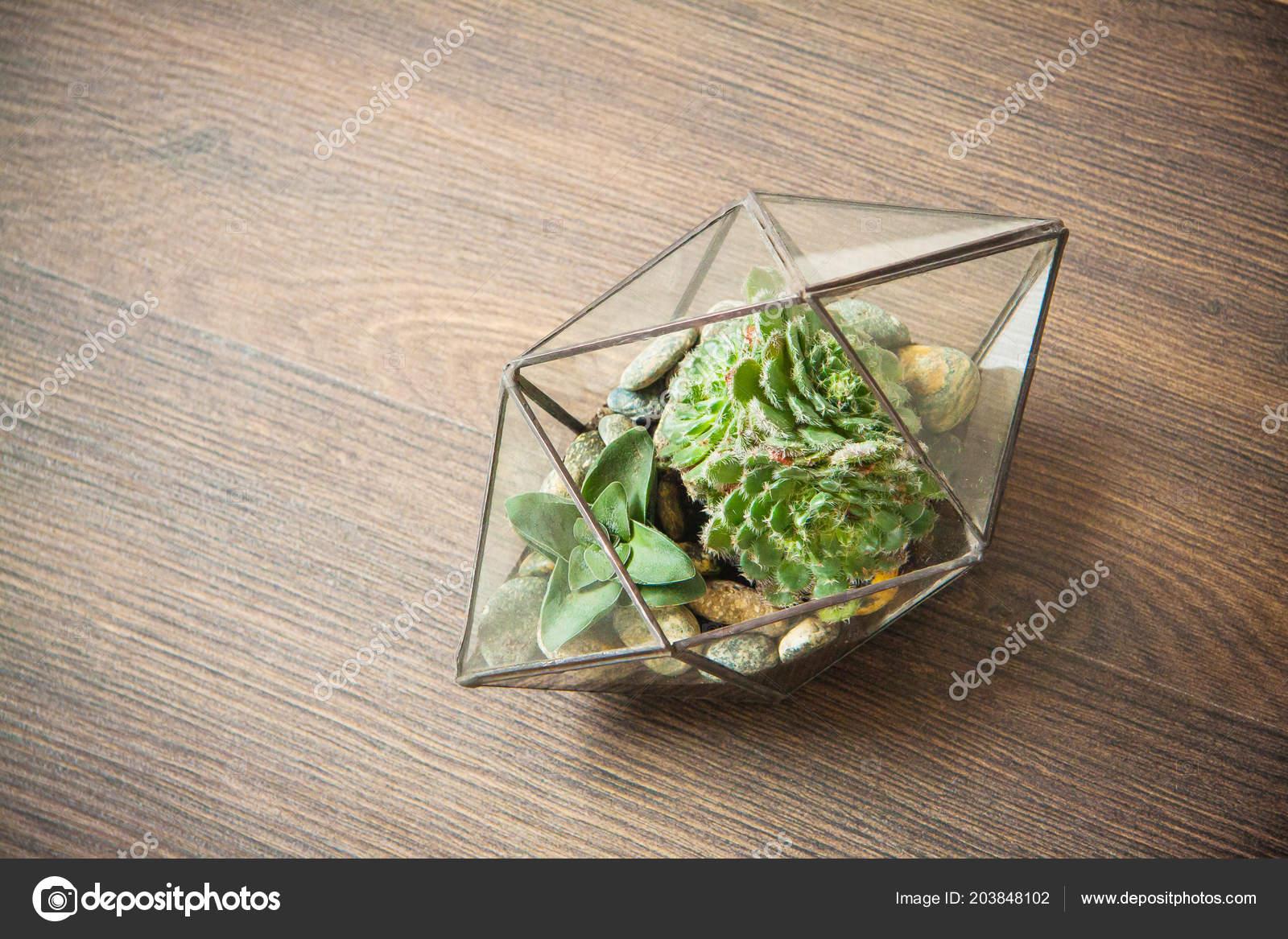 Glas Florarium Für Anlage Schöne Geometrische Vase Für Interio
