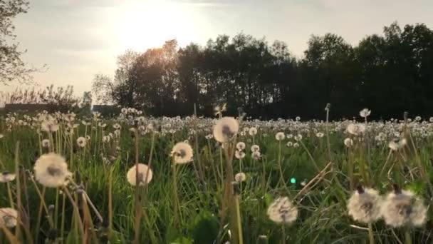 Slomo procházkou dlouhou trávou