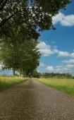 Fotografie Prázdná cesta s trávou a stromy