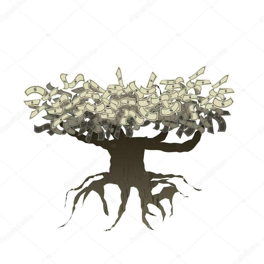 money tree with root isolated on white