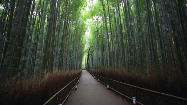 Bambusový les, Sagano, Ukyo Ward, Arashiyama, Kjóto, oblast Kansai, Honshu, Japonsko, Asie