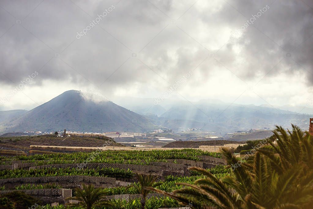Banana plantation field against the background of mountains in Tenerife Canary Islands, Spain