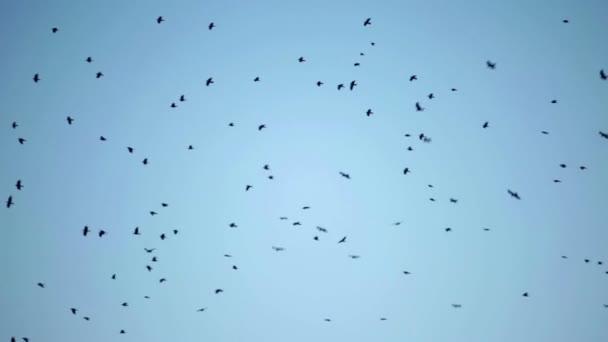 τεράστιο τεράστιο πουλί Δωρεάν HD σεξ δωρεάν