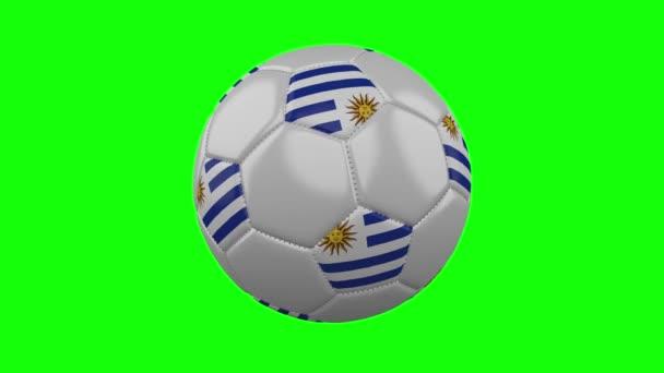 Foci labda Uruguay zászló zöld chroma kulcs háttér, loop