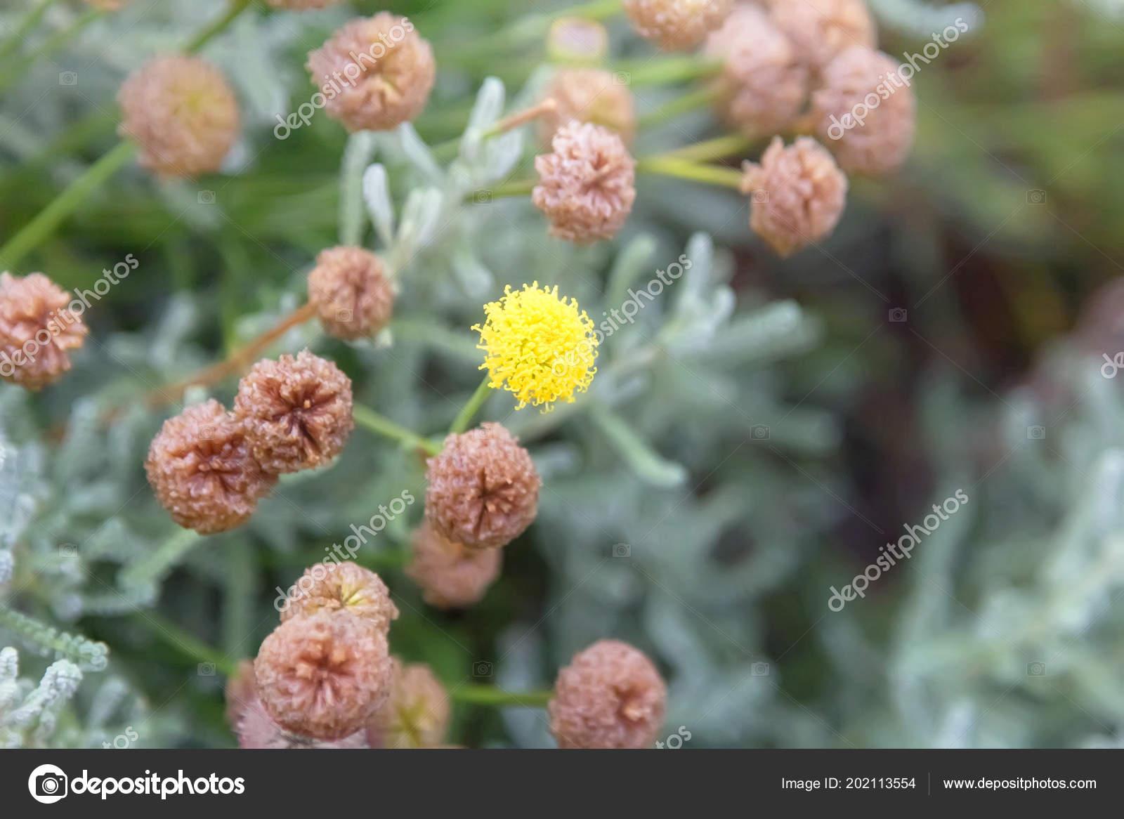 Yellow Clover Flower In The Meadow Stock Photo Belikart 202113554