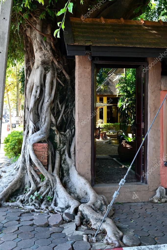 Exotic tree with huge roots