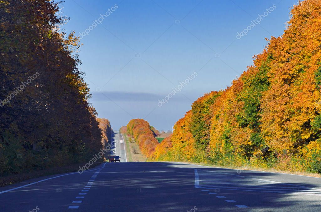 road for motor vehicles, meanders between bright yellow tree