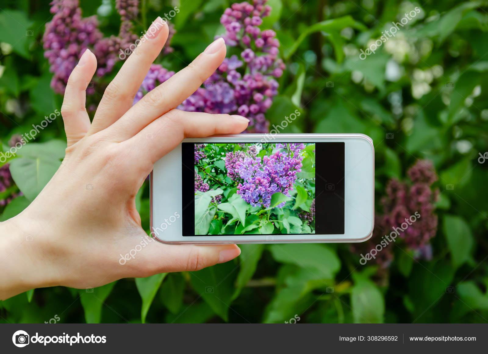 Телефон фотографирует с фиолетовым оттенком