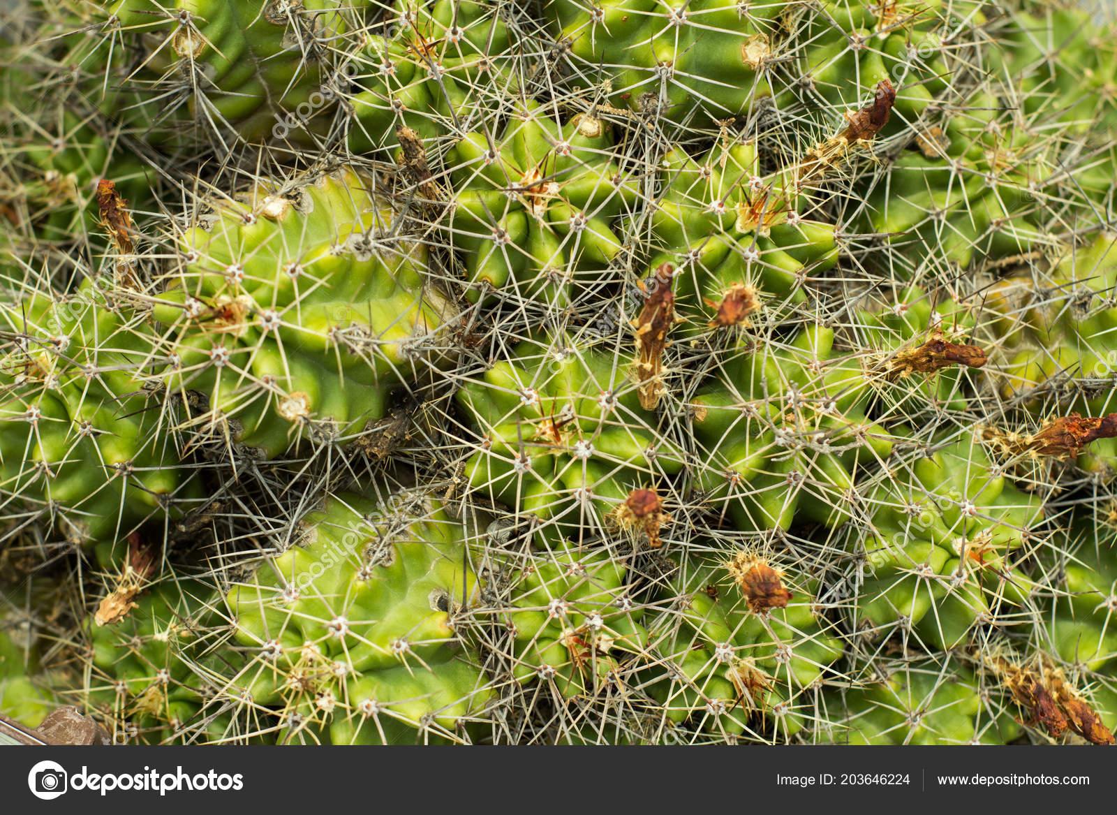 Images: desert habitat   Succulents Natural Habitat Cactus