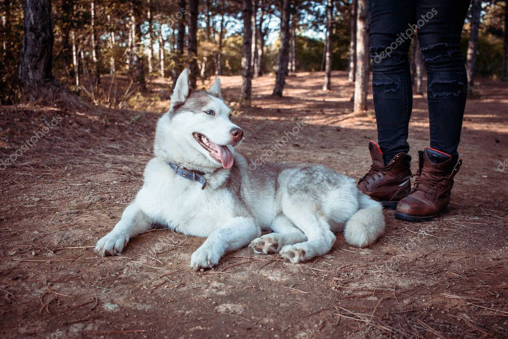 young hipster in black jeans, leather boots and shirt walk in forest with siberian husky dog