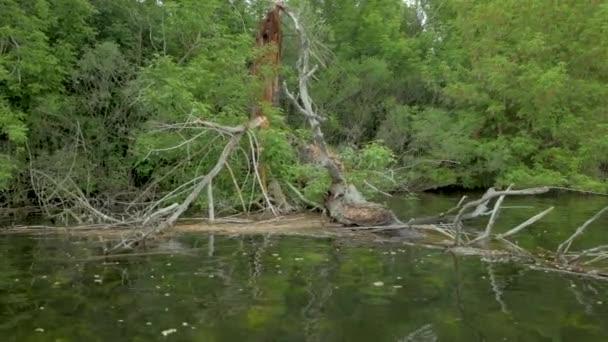 krásná krajina padlých stromů v řece, jarní Les ve vodě