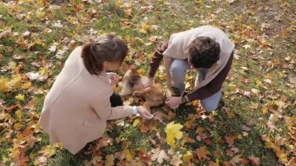 Couple of young people play with dog in autumn park