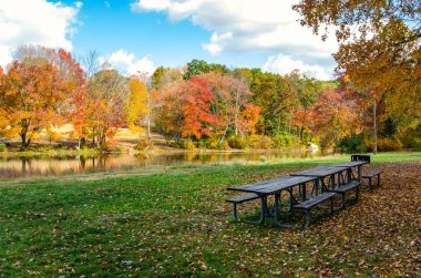 EmptY wooden picninc tables and BBQ on a riverside meadow covered in fallen leaves on a sunnyautumn day. Colourful trees line the river. Southford Falls State Park, CT, USA. stock vector