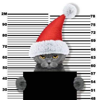 Cute cat as santa claus in prison. Isolated on white