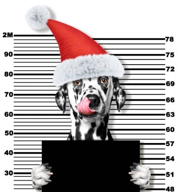 Dalmatian dog as santa claus in prison. Isolated on white