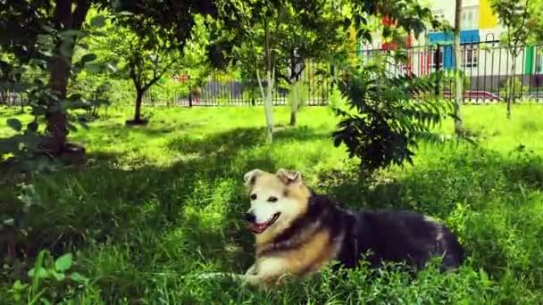 Ein obdachloser Hund ruht im Garten auf dem grünen Rasen. Fürsorge für obdachlose Tiere.