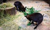 Fotografia due piccole invecchiato sta mangiando foglie verdi