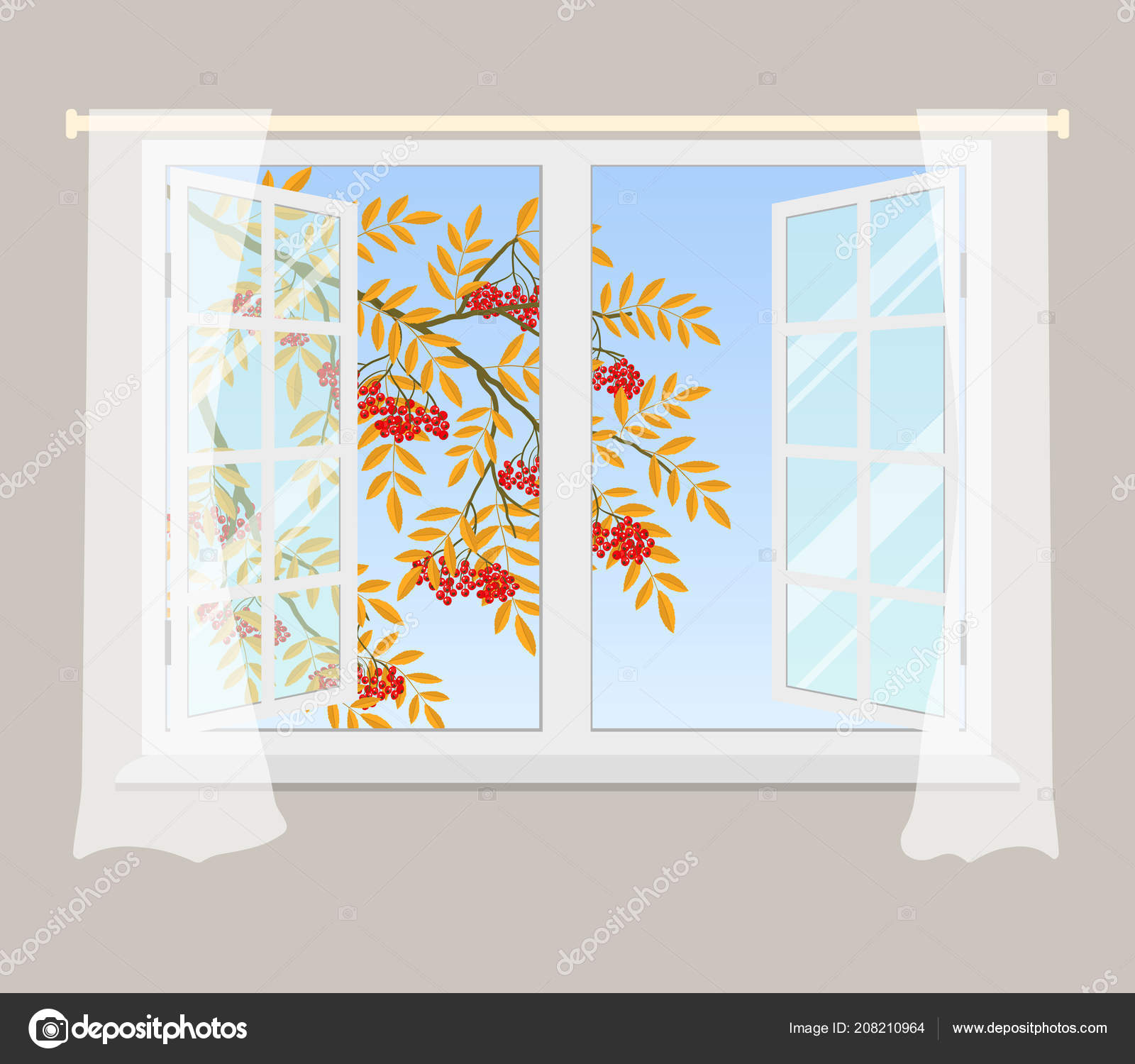 aa185586d Rowan Branch Window Red Berries Yellow Leaves Open Window Curtains — Stock  Vector