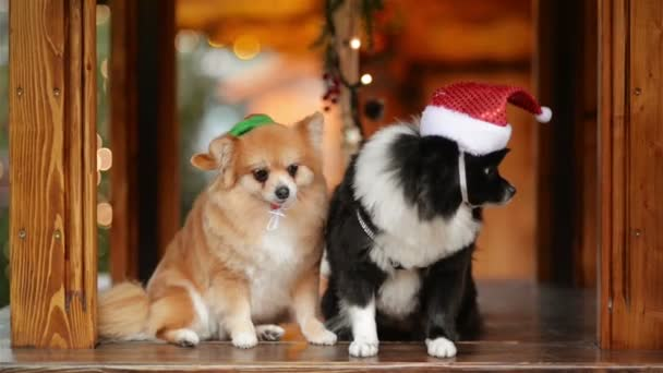 Two Pretty Dogs Posing Together. Merry Christmas and Happy New Year Concept.