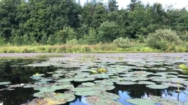 Letní vodácký krásná lily pond