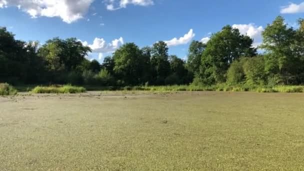 Veslování rybník zahrnuty zelené rostliny