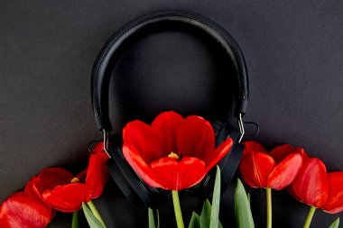 Black Headphones and red  bouquet tulips on black background. Flat lay. Top view. Copy space. Listen to  the music.