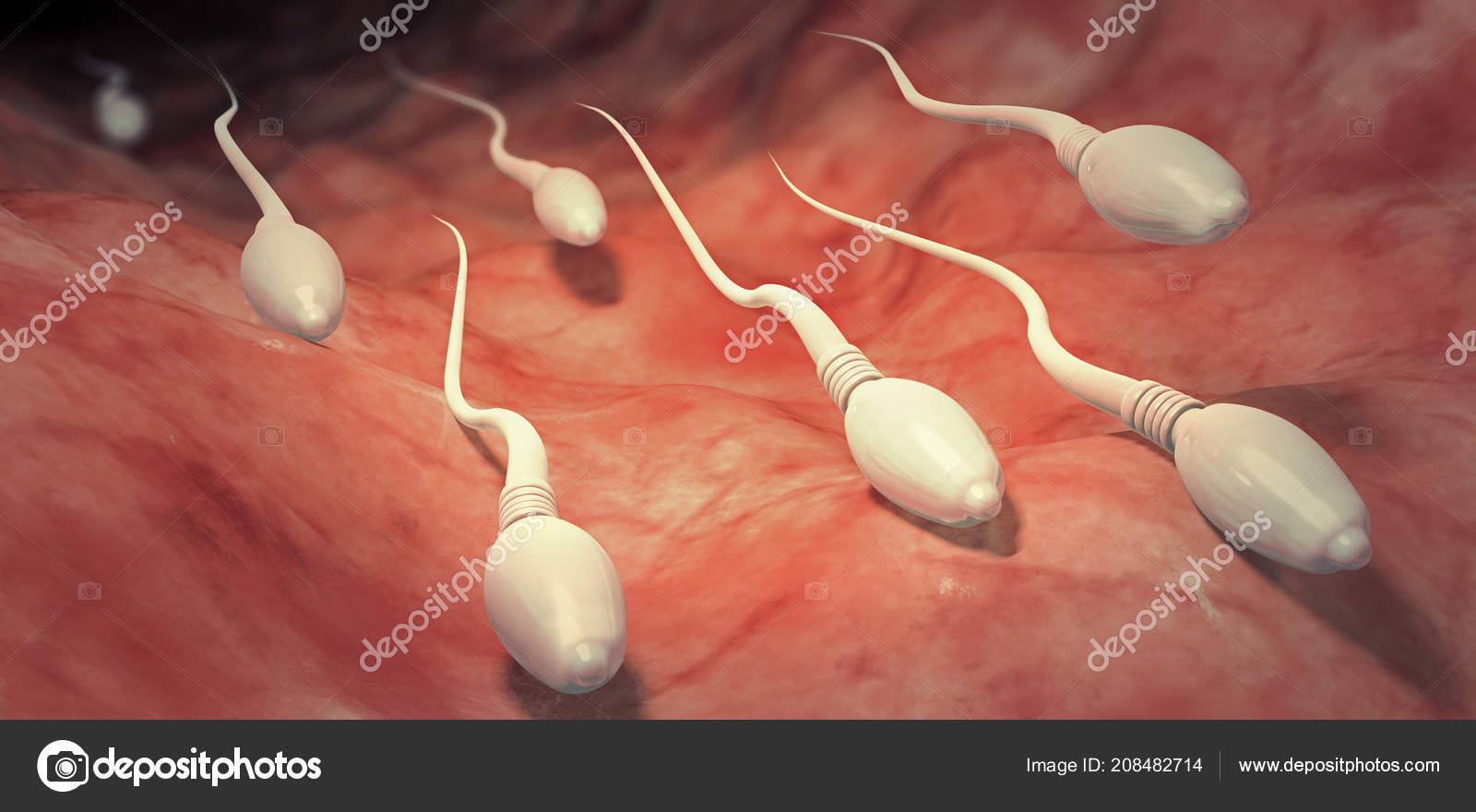 human-sperm-collection