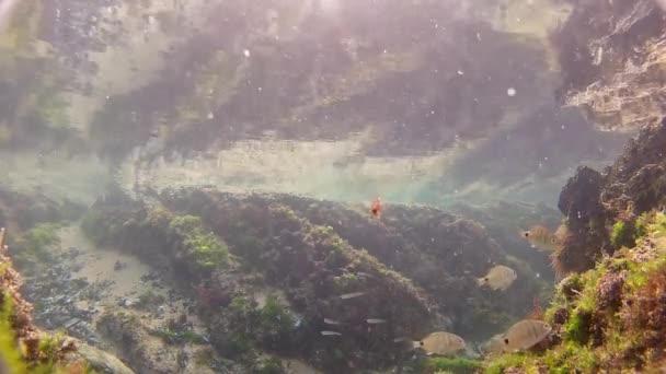 Tiché podvodní záběry ryb v Atlantickém oceánu při odlivu